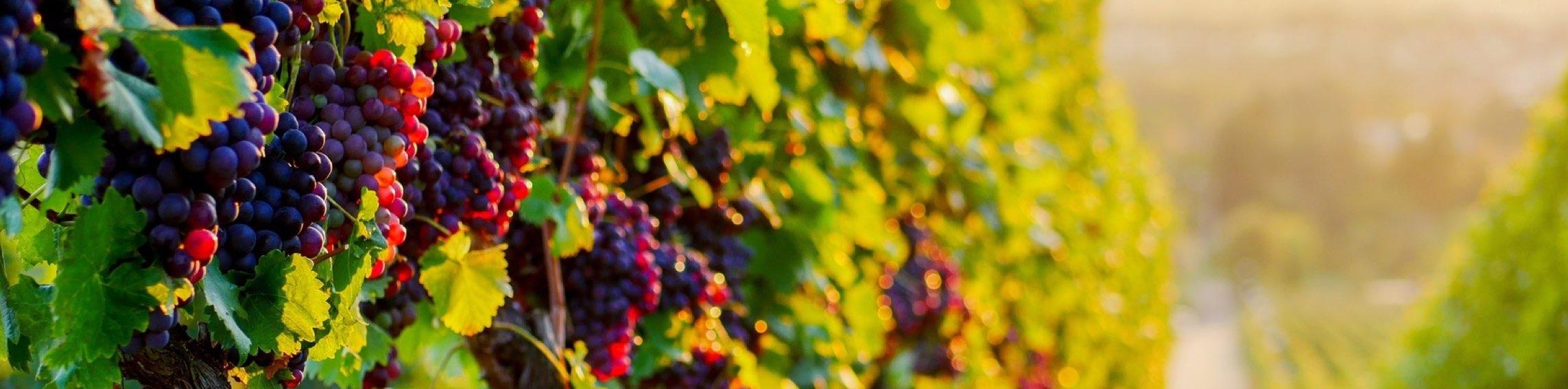 Vins.001